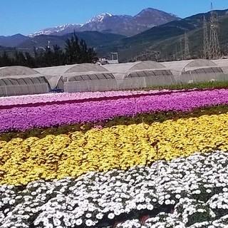 Piana (Regione Liguria) in Senato per parlare di agricoltura