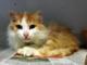 Savona: dolcissima gatta cerca casa