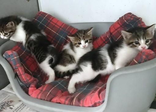Appello dell'Enpa: cercasi mamme-gatte