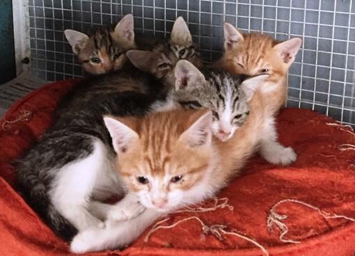 Altare, una cucciolata di gattini malati soccorsa dall'Enpa (FOTO)