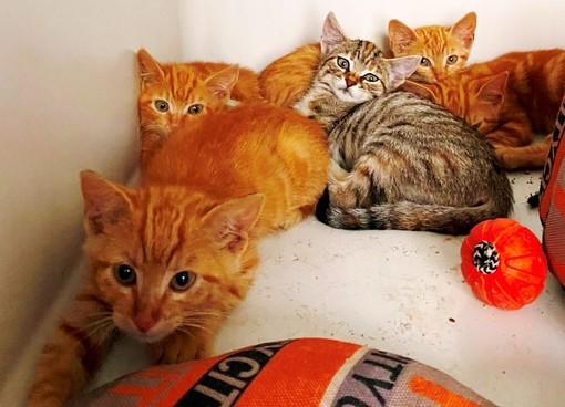 Savona, cinque gattini abbandonati in un parcheggio: la denuncia dell'Enpa