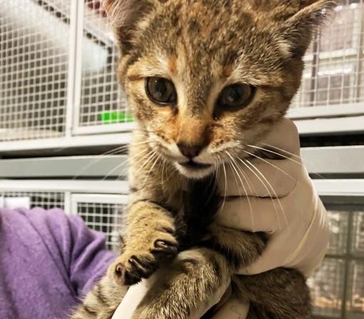 Savona, gattina si rifugia nel vano motore di un'auto: salvata dai vigili del fuoco (FOTO)