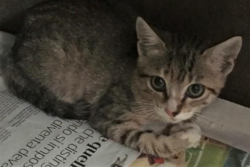 """Savona: la storia di una gatta """"salvata al bar"""""""