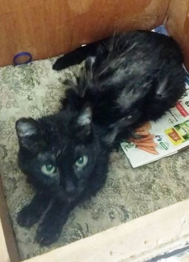 Savona, deceduta la padrona gatto cerca casa: appello di Enpa