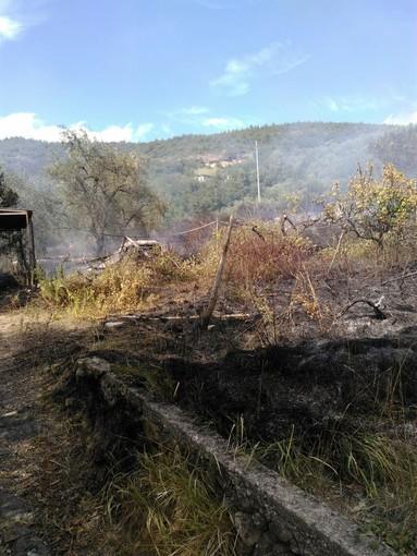 Albissola Marina: incendio bosco, intervento dei vigili del fuoco