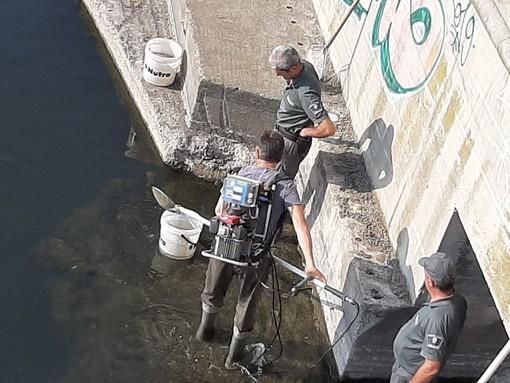 Savona, in corso l'intervento di recupero dei pesci alla foce del Letimbro (FOTO E VIDEO)