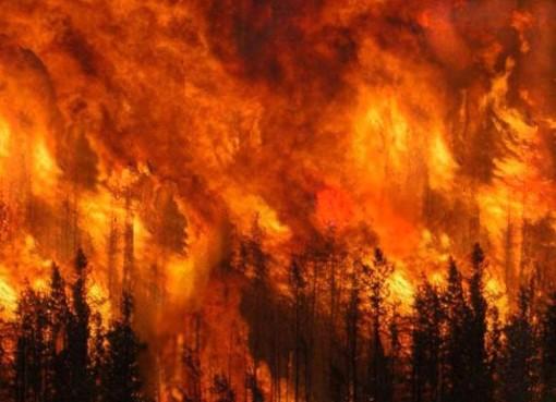 """Il decalogo di WWF e Questura di Savona per evitare i """"classici"""" incendi da merendino"""