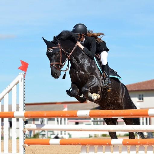 Le origini dell'ippica e delle corse di cavalli