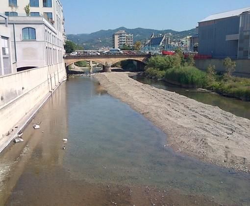 Savona, intervento di recupero della fauna ittica in difficoltà alla foce del fiume Letimbro