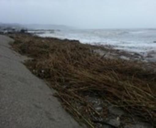 Savona: via libera per lo smaltimento delle sterpaglie portate dalle mareggiate in spiaggia