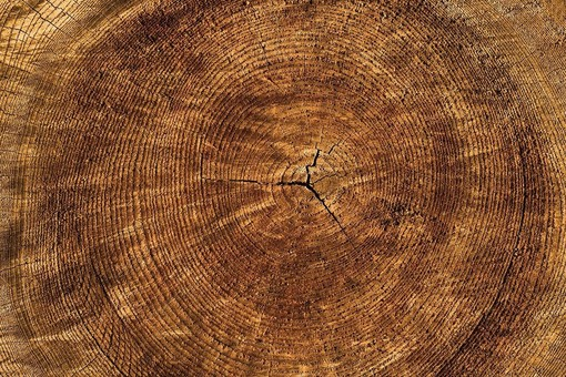 Albenga: possibile ritirare gratuitamente legna