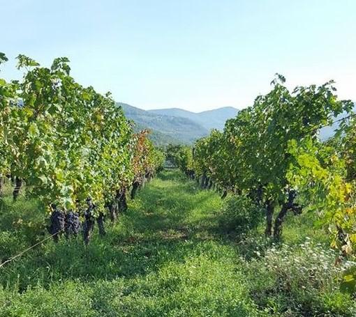 """La """"Liguria del vino"""" unita contro la crisi"""