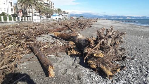 Albenga, firmata ordinanza per consentire ai privati di prendere la legna accumulata dalla mareggiata