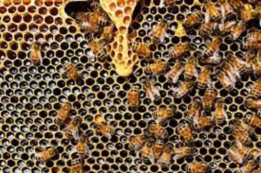 Agroindustria, scegliere il miele made in Liguria per tutelare il consumatore e favorire le imprese locali