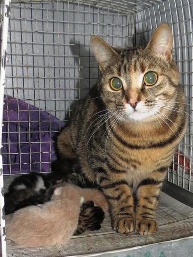 """L'appello dell'Enpa: """"Mamma gatta cerca casa"""""""