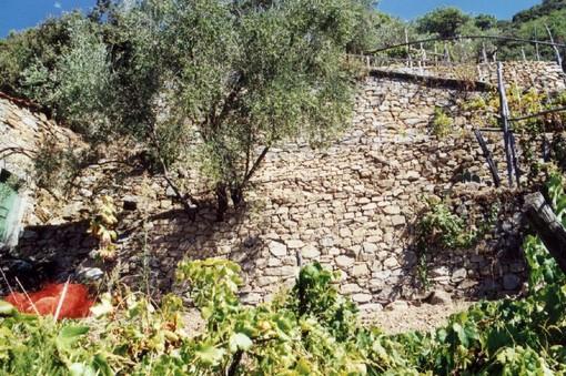 I muretti a secco della Liguria sfidano la grande muraglia cinese