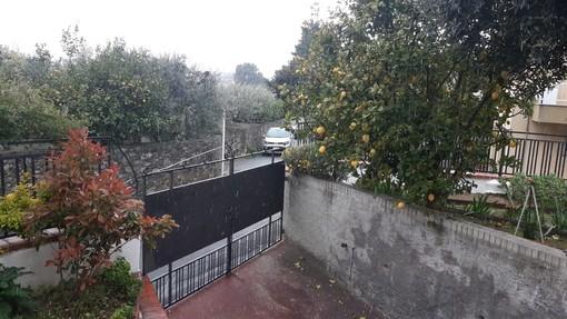 Nevischio dall'interno alla costa, l'inverno bussa ancora alle porte da Albisola al Cadibona (VIDEO)