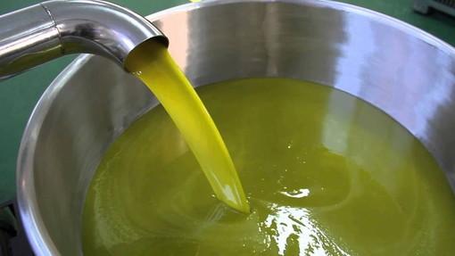 A Ranzi un corso di coltivazione e potatura dell'olivo