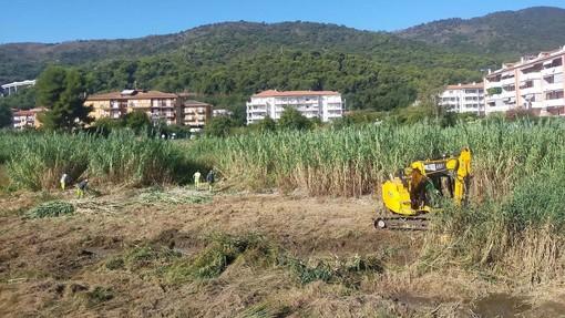 Andora, avviata la pulizia del Merula con lo sfoltimento della vegetazione