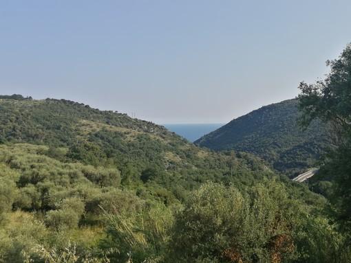 GAL Valli Savonesi, aperte le manifestazioni d'interesse al bando per la creazione di un Consorzio Forestale