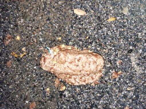 Nella foto: una delle polpette avvelenate