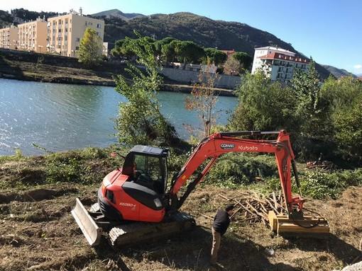 Albenga: pulizia sulle sponde del fiume Centa