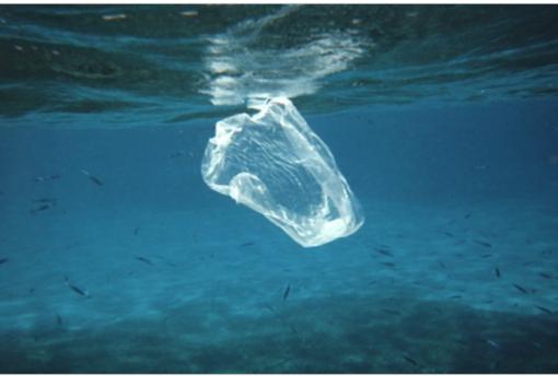 """Progetto """"Plastic Free"""", al Boselli Alberti di Savona arrivano i distributori d'acqua"""