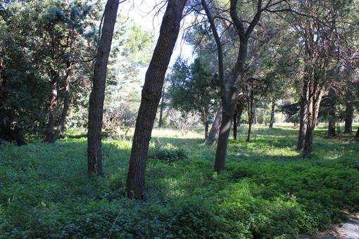 """Lettera aperta di Roberto Nicolick: """"Il parco Astengo del San Paolo di Savona, una opportunità"""""""