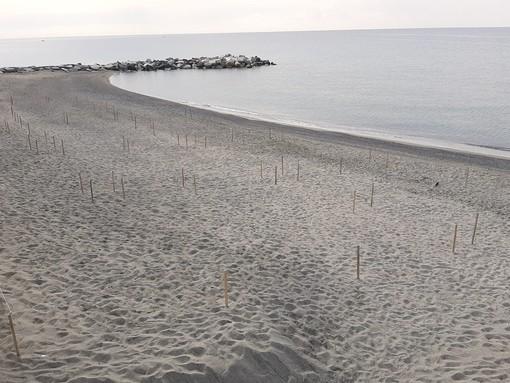 Celle e la spiaggia libera dei Piani in versione francese: posizionati i paletti e le corde (FOTO E VIDEO)