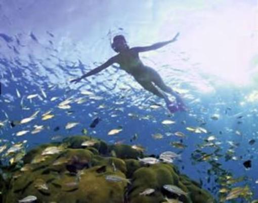 Stop alla strage di pesci e crostacei durante l'estate: l'appello dell'Enpa