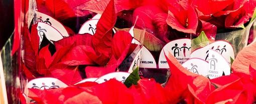 """A Loano le """"Stelle di Natale"""" e i """"Sogni di cioccolato"""" di Ail per aiutare la ricerca contro leucemie, linfomi e mieloma"""