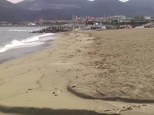 Savona, legname sulle spiagge delle Fornaci e di Zinola: intervento di Ata (FOTO)