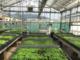 """Controllo e gestione dell'efficienza energetica nelle colture protette """"Serre Smart"""""""