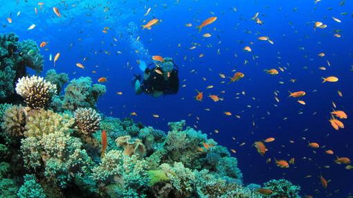 A Spotorno alla scoperta della vita sott'acqua
