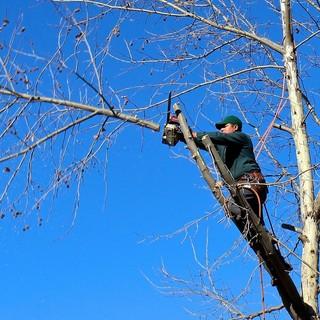 """I lavori forestali specializzati riconosciuti come usuranti. Coldiretti: """"Proposta importante per settore fondamentale nel savonese"""""""