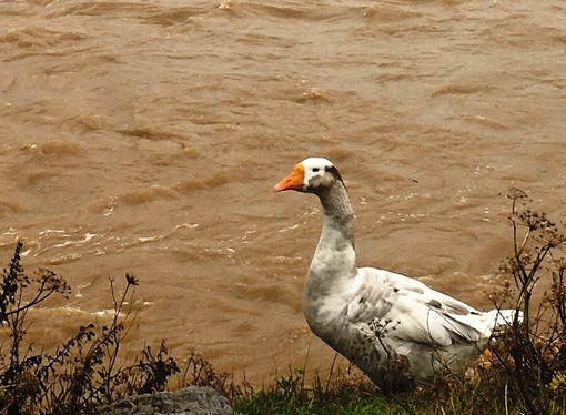 Maltempo, diversi animali 'alluvionati' soccorsi dall'Enpa