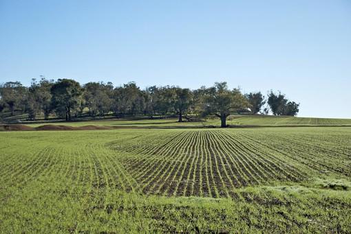 Agricoltura, crescono gli ettari coltivati ed il recupero terreni incolti