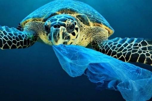 """Decreto Salvamare. Il deputato varazzino Battelli: """"Così liberiamo dalla plastica le nostre acque e le nostre spiagge"""""""