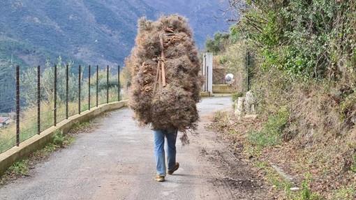 Boissano, tagliano illecitamente 80 kg di erica arborea: sanzionati due cittadini albanesi
