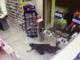 IN copertina: un'immagine della tentata rapina a una farmacia savonese durante il turno di apertura. In allegato: la copertina del report su Savona del criminologo Padovano