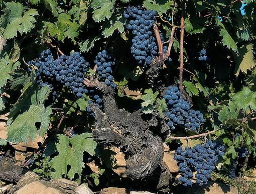 141mila euro dalla Regione per promuovere i vini liguri fuori dall'Europa