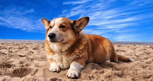 """""""Per una corretta gestione del cane"""": il 20 febbraio un incontro a Cairo Montenotte"""