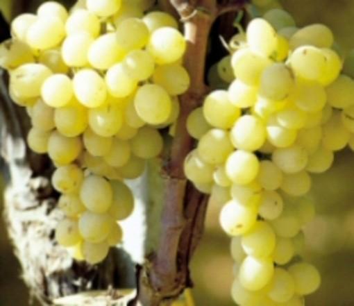 Vini Inquieti: 84 etichette selezionate per la seconda rassegna di Finalborgo