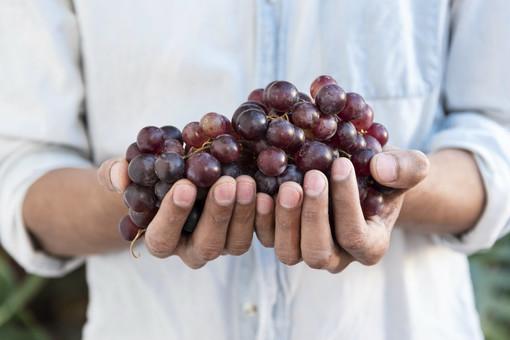 Perché mangiare uva fa bene. Alla scoperta delle sue proprietà con Fab SMS