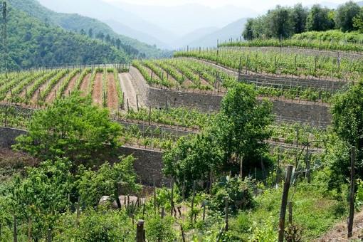 """Imprese, Coldiretti: """"Giovani sempre più attratti dall'agricoltura, settore chiave per l'economia dei territori"""""""