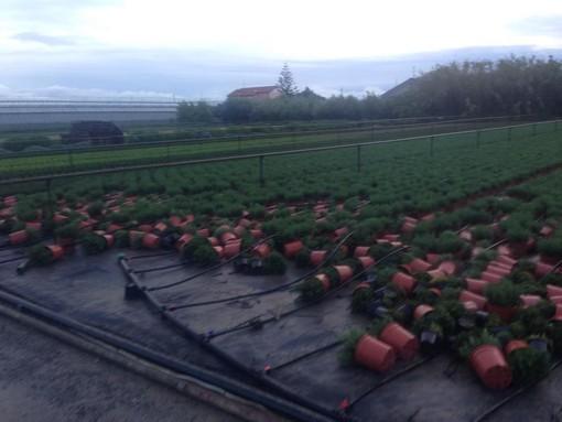 Emergenza maltempo, la Cia sollecita la solidarietà tra agricoltori