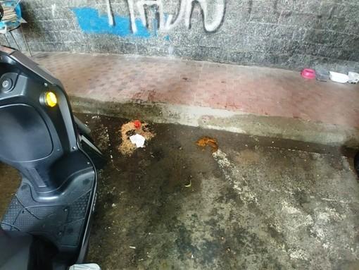 """Savona, Enpa: """"La colonia felina di via Corridoni 'assediata' dalla maleducazione degli esseri umani"""""""