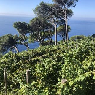 L'Europa frena sull'etichettatura del vino come prodotto pericoloso
