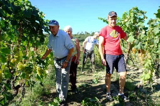 """Vendemmia 2019, Mirco Mastroianni (CIA Savona): """"Vini di qualità dai nostri produttori, sì alla semplificazione amministrativa"""""""