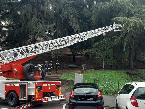 Savona, albero pericolante in via Mignone: al lavoro i Vigili del Fuoco